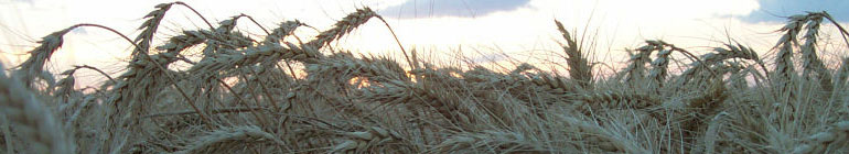 David's Farm Blog header image 1